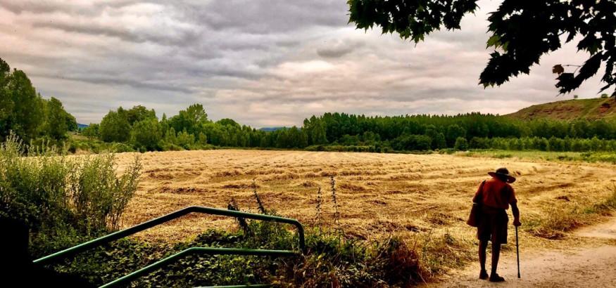 Caminante en campo de cebada. Autor: Carlos-Salas