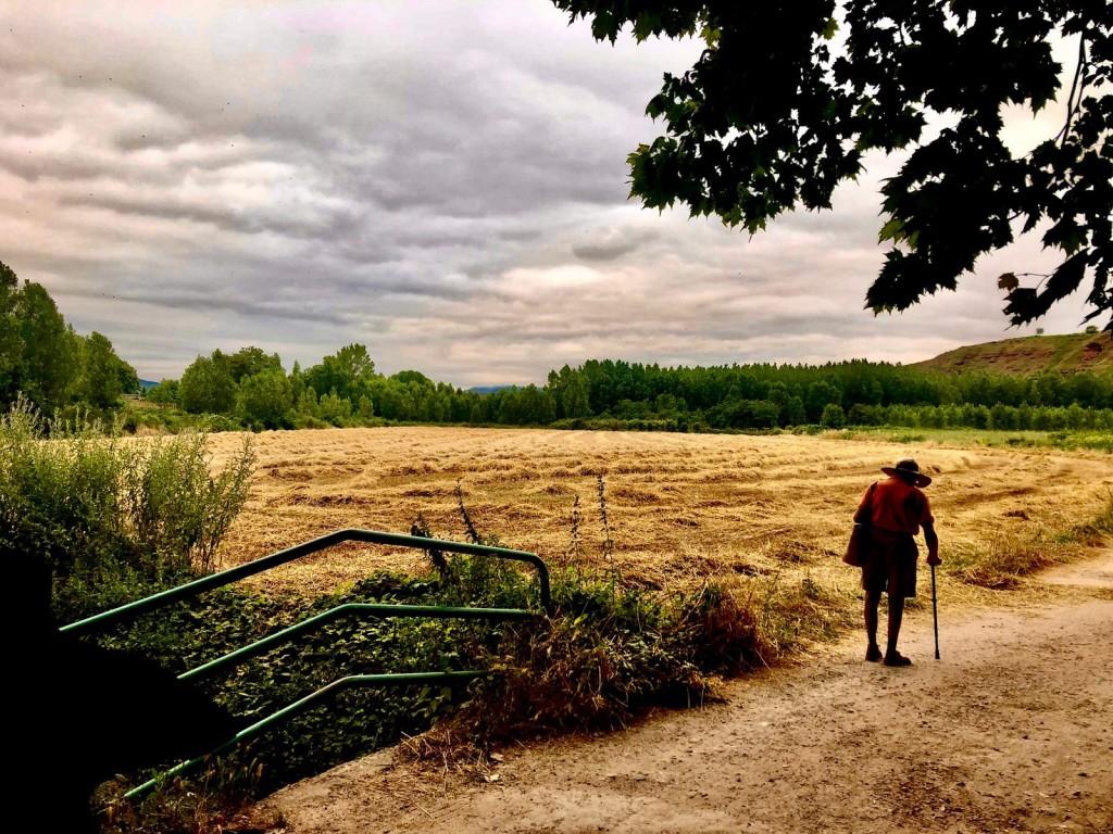 Carlos Salas. Caminante en campo de cebada. Nájera. La Rioja